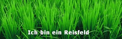 Reisfeld Documenta 12
